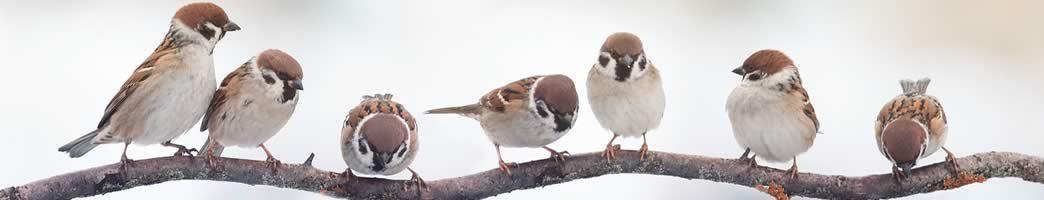 collective nouns for birds
