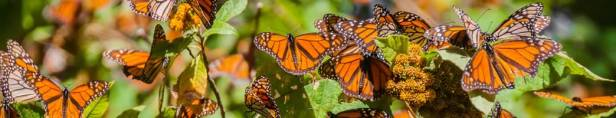 Collective Nouns for Insects