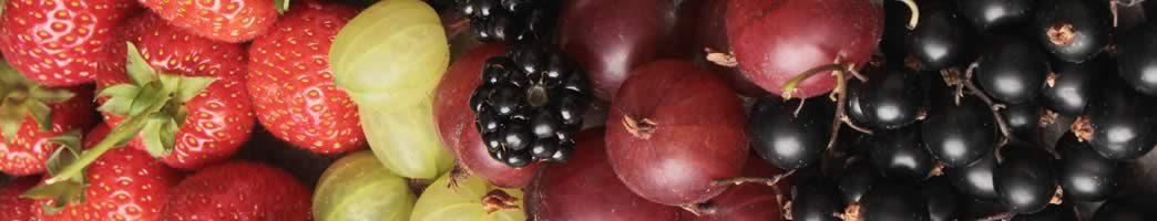 fruit family list