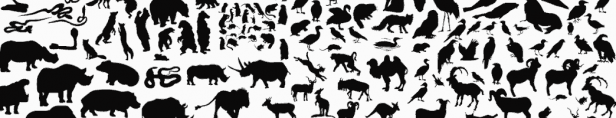 unusual facts about animals